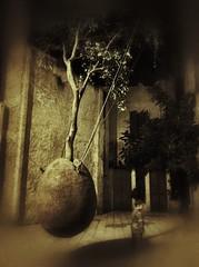 Tree. Jaffa/Tel Aviv