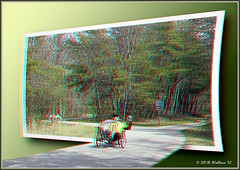 Trike Wave (starg82343) Tags: park people man male bike outside outdoors person moving stereoscopic 3d action path wheels helmet wave anaglyph trail stereo riding illusion transportation vehicle trike traveling waving depth paved outofbounds stereoscopy wooded oof oob stereographic outofframe peddling brianwallace