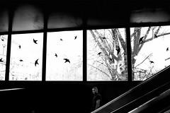 (Sakis Dazanis) Tags: street berlin photography sbahn sakis dazanis