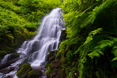 The Long Wait Is Over (Michael Bollino) Tags: green oregon waterfall spring nikon northwest falls gorge lush ferns columbiarivergorge fairyfalls 800e