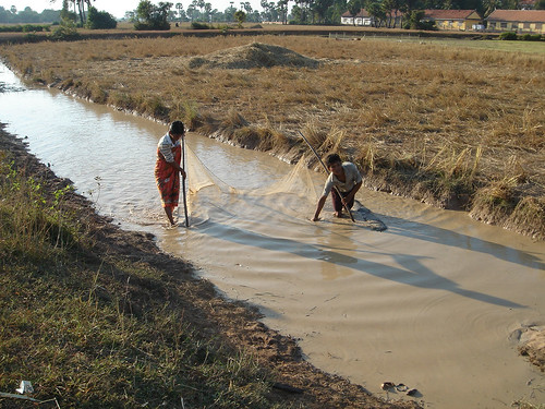 Rice field fisheries, Cambodia. Photo by Francis Murray, 2007