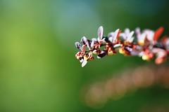 Spring (©skarson) Tags: