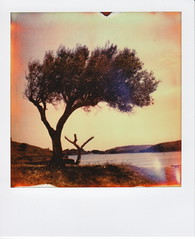 Tramuntana (santisss) Tags: polaroid sx70 instant impossible cadaques px70 impossibleproject theimpossibleproject coolfilm px70film