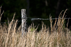 Indian Head Maryland Rail Trail (Bravo213) Tags: fence wire post grasses barbed cy twothumbsup bigmomma gamewinner cy2 challengeyouwinner 15challengeswinner thechallengefactory herowinner ultraherowinner pregamewinner