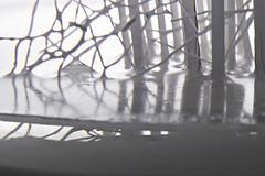 Bosque / Woods (araujovisual) Tags: white macro blanco canon landscape woods paisaje minimal bosque minimalismo araujovisual