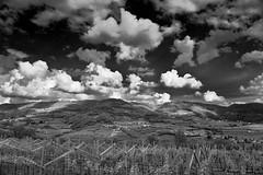 Wine roads (p_ale) Tags: sky blackandwhite clouds landscape nuvole wine vineyards verona vino valpolicella vigneti