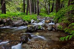 Abundance (vincestamey) Tags: creek river flow stream bigsur polarizer heliopan linekiln vincestamey