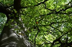 Gribskov, Denmark (Jacob Damgaard) Tags: mushroom denmark autum hunting danish nordic scandinavia svamp collecting hunt skov svampe efterår gribskov svampetur