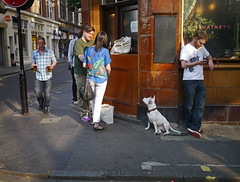 The Blue Posts (zoonabar) Tags: street blue dog london beer pub soho posts pints