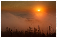 Sunrise (photosisee) Tags: park morning blue trees orange sun mist m