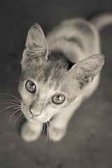 kitty 2 (Saddif Ovee) Tags: highqualityanimals