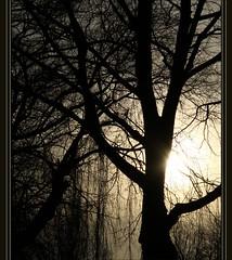 Tree of Life... (geraldine fotografie) Tags: life sunset tree zonsondergang boom mystic leven mygearandme mygearandmesilver mygearandmegold mygearandmeplatinum mygearandmediamond rememberthatmomentlevel1 rememberthatmomentlevel2 rememberthatmomentlevel3
