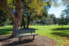 Park bench, Adelaide Botanical Park - South Australia (Robert Lang Photography) Tags: trees tree grass relax botanical outdoors sitting outdoor relaxing australia adelaide recreation parkbench parksouth
