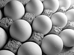 Carton of Eggs (ALINA SEDANO) Tags: life food white macro bird chicken industry cooking nature closeup breakfast paper easter healthy raw pattern natural box eating farm egg group shell row fresh container cardboard poultry meal eggs tray carton dozen organic diet hen package r