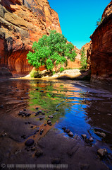 Paria River Canyon (jlindhardt) Tags: park arizona reflection river photography nikon sandstone canyon cliffs national cottonwood gorge vermilion buckskin gulch paria lindhardt d7k d7000 jlindhardt lindhardtphotography