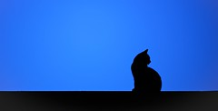 A Night on the Tiles (paulapics2) Tags: blue roof pet silhouette cat kitty canon5d bluehour moggie