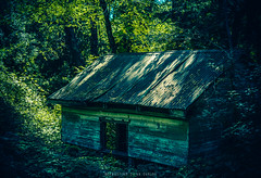 Bosque Encantado (Seba Silva) Tags: chile forest photoshop 50mm panoramic bosque charmed hause lightroom a57 preset bobo minoltalens sonyalpha macro28 slta57 sebastiansilvaogalde