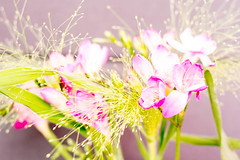 Flower fireworks... (Benjamin Merceron) Tags: flowers flower green fleur fleurs 35mm nikon colours fireworks couleurs explosion vert feuxdartifice d5200