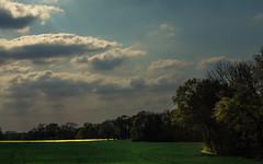 Moments (Netsrak) Tags: blue trees light shadow cloud tree green nature yellow clouds rural forest germany landscape deutschland licht woods bonn ray natur feld meadow wiese wolke wolken rape gelb nrw rays grn blau landschaft wald rhein bume raps schatten baum sonnenstrahl nordrheinwestfalen acker sieg strahl forst lndlich strahlen