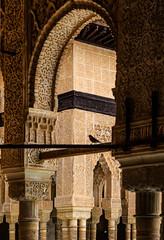 The Alhambra, Granada - Palacios Nazares - Palacio de los Leones - little sparrow in the Patio de los Leones (Court of the Lions) (peripathetic) Tags: building beauty architecture canon buildings spain worldheritagesite espana alhambra moorish granada 5d palaces 2016 nasrid nazaries 5dmkiii 5dmk3 canoneos5dmk3