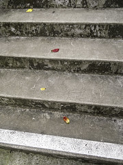 ESCALAFLEUR (didi tokaoui) Tags: flower photo staircase didi escaliers tokaoui escalafleur