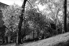 XT1-04-31-15-288-2 (a.cadore) Tags: nyc newyorkcity blackandwhite bw zeiss landscape centralpark candid uptown fujifilm uws carlzeiss xt1 biogont2828 zeissbiogon28mmf28 fujifilmxt1