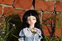 A new girl is home - Nyka (3) (JL_the_Lion) Tags: sun flower girl outfit doll dress outdoor 14 mind bjd kiki dim dollhouse msd adina mikkas nyka anewgirlishomenyka