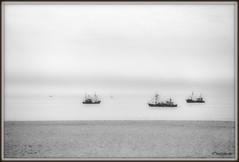 _JVA4594 (mrjean.eu) Tags: gris noir belgique noiretblanc knokke vagues nuance ambiance nuances borddemer heurebleue lumièredusoir