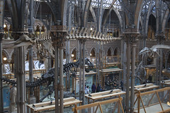 Oxford University Museum of Natural History (Xalira) Tags: england heritage history museum spring university natural oxford april biology 2015