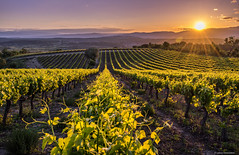 Vineyard (Lud0fr) Tags: sunset sun france vineyard amazing sony paysage ardche a7r