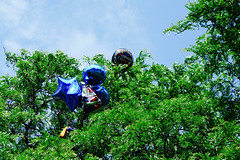 get a grip, grads! (KevinIrvineChi) Tags: blue red sky sun chicago black tree green face silver balloons outside outdoors star shiny day sad stuck outdoor branches sony graduation sunny bluesky lookingup round reflective grad mylar grads congrats chicagoist emoji curbedchicago dscrx100