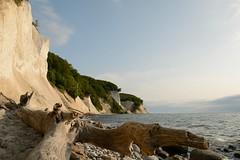 Baumreste am Strand (Caora) Tags: germany buchenwald nationalpark unesco rgen whitecliffs buchen kreidekste jasmund