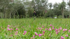 carpet of pretty flowers