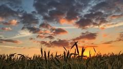 20.06.2016 (Kyriakos11) Tags: sky clouds sunrise germany deutschland ngc wolken morgenrot morgenstund morgenrte grosgerau kyriakos11