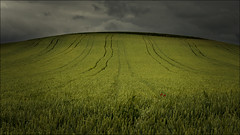 Amapolas (Jose Cantorna) Tags: nikon paisaje cielo nubes campo hierba amapolas d610
