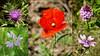 orman çiçekleri (adilekin) Tags: flowers red tree green forest trekking turkey purple outdoor hiking istanbul ağva gebze kocaeli smcpentaxm28mmf28 pkmount sonya6000