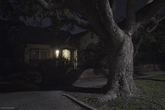 Camberwell (Ranga 1) Tags: australia australian suburbs victoria camberwell nocturnal night nightphotography nightexposure dark streetscene streetlight tree gumtree floweringgum urban urbanlandscape canon ef1740mmf4lusm canoneos5dmarkiii davidyoung explore