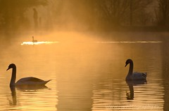 Man in the mist. (johnboy125.very busy sorry ;-() Tags: mist reflection sunrise swan pond nikon vale stockport reddish 70300 d7000