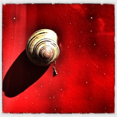 Shell On Red (Christian Stepien.com) Tags: ontario canada color colour nature animal spring snail christian 4s brampton iphone stepien