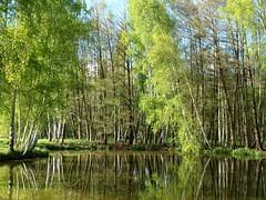 Un après-midi au bord de l'eau ★ °°-° (Titole) Tags: trees reflection pond mare arbres thumbsup favescontestwinner friendlychallenges thechallengefactory gamex2 herowinner storybookwinner titole nicolefaton