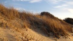 IMG_5373 (Martina Mastromonaco) Tags: beach vineyard martha s subset