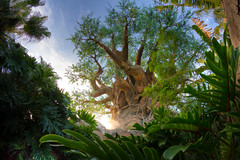 Animal Kingdom - See the Forest