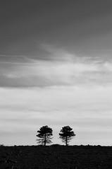 Coppia di Fatto (bebo82) Tags: trees blackandwhite bw grass alberi pentax erba prato biancoenero pentaxk20d pentaxk20 rakitovec