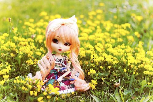 In a Field of Yellow II