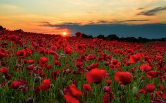 Poppy Field Sunset (richjjones) Tags: sunset field canon spring 7d poppy poppies worcestershire 1740mm lseries bewdley