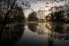 (CarolienCadoni..) Tags: trees lake reflection netherlands fog photography spring foggy may nederland groningen smeerling sal2470z sonyslta99