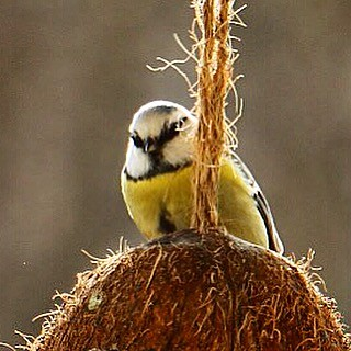 #bird #birds #animal #animals #wildlife #wildlife_perfection #your_best_birds #natgeo #nature #nature_perfection #gothenburg #göteborg #sweden #iran_photographer #عکاسان_ایرانی