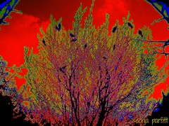 blackbirds (Sonja Parfitt) Tags: blue red tree birds photomanipulation painted layered