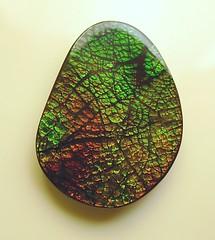 AMMOLITE STONE FOR SALE (The Ammolite) Tags: fossil   ammolite ammonite rock gemstone