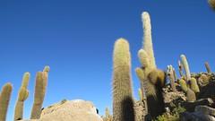 - 2016-05-06 at 22-47-12 + Cactus Island